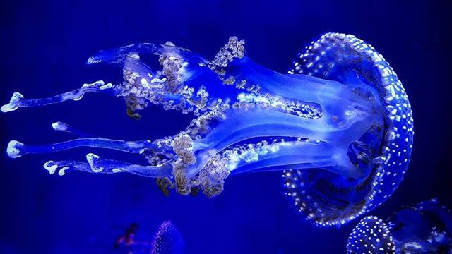 jellyfish museum 2