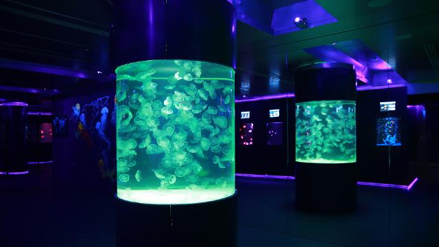 jellyfish museum 3